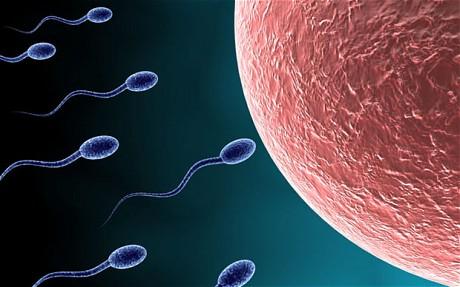 sperm_1790713c